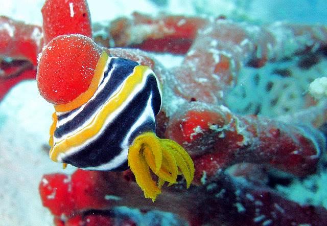 Hurghada_0825.jpg